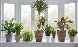 Protect apartment plants with uv window